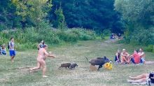 Naked man chases wild boar through public park after swine steals his laptop