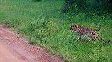 Rabbit cheats death as it outruns leopard