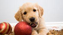 12 peligros de los que deberías proteger a tu perro en estas fiestas navideñas