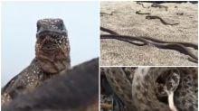 【有片】自然界超驚險影片 蜥蜴遇蛇群大逃走
