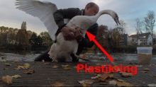 Man removes plastic ring from swan's body
