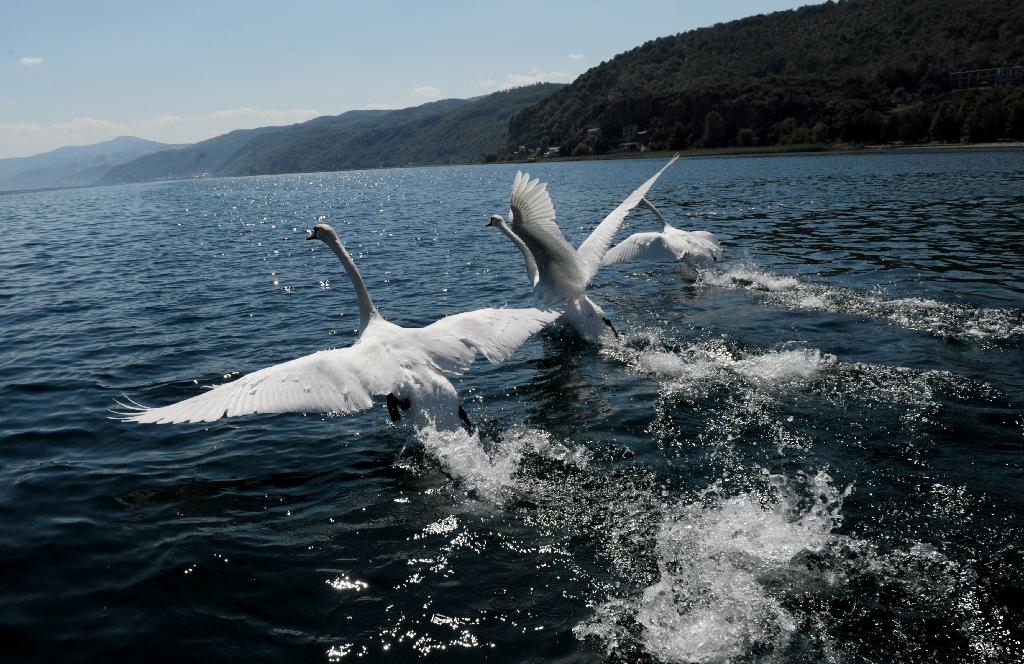 Macedonia's Lake Ohrid is three million years old and home to more than 200 species of flora and fauna found nowhere else in the world (AFP Photo/ARMEND NIMANI)