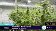 The growing cannabis industry in Massachusetts