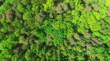 In wohlhabenden Ländern steigt die Waldfläche