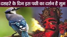 Dussehra 2018: Importance of Sighting a Neelkanth bird on Dussehra day