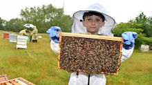 Five-year-old becomes Britain's youngest certified beekeeper