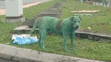 Cane dipinto di verde in Malesia, le proteste sui social network