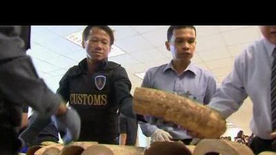 Smuggled ivory seized in Thailand
