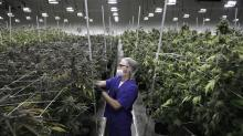 Nevada pot sites stock, check bud before legal sales fire up