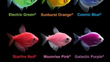 GloFish® Brand of Spectrum Brands Pet LLC Expands Fluorescent Fish Offerings in Canada