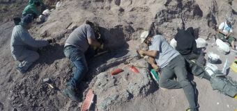 Record-setting dinosaur fossils found in Argentina