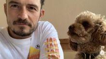 Orlando Bloom da por muerto a su perro Mighty tras siete días desaparecido