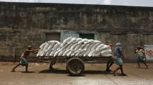 Sugar output from India, Thailand, China seen falling in 2019/20: INTL FCStone