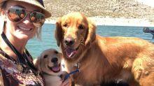 Cachorro arrisca a própria vida para salvar dona de picada de cobra