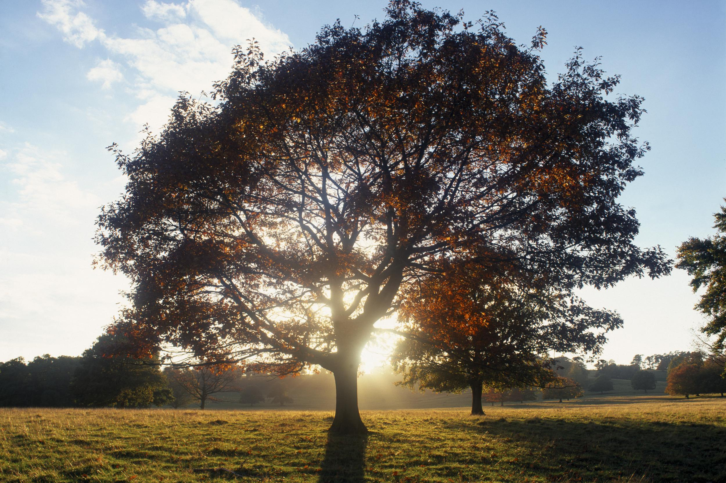 """<p style=""""font-size:14.4444446563721px;"""">The<a href=""""http://www.nationaltrust.org.uk/petworthautumnwalk"""" target=""""_blank"""">Petworth House and Park ancient trees walk</a>takes in abeautiful deer park landscaped by 'Capability' was the inspiration for the great landscape painter, J.M.W. Turner.In autumn, the woodlands and grasslands transform slowly from green to gold. The magnificent oaks, limes, beeches and chestnuts create canopies of buttery-gold foliage and at the centre of the deer park stands an English oak tree with golden leaves that has stood overlooking the estate for almost 1000 years.In the evening light, the setting sun bathes the mansion in a warm yellow glow, whilst its windows shine gold and red.In early autumn, the parkland is often transformed into a savannah-type landscape – a golden expanse of tall waving grasses and seed heads. Peter Richards, Volunteer Gardener for the National Trust, says: """"Everywhere you look in the park there is something to cheer you up. It's a treescape going through a transition in colour as summer turns to autumn.""""</p>  <p style=""""font-size:14.4444446563721px;""""></p>"""