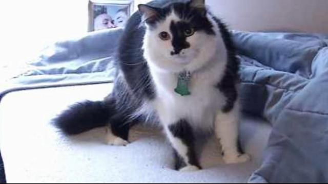 911 Call Reveals Family Held Hostage by Fat Cat