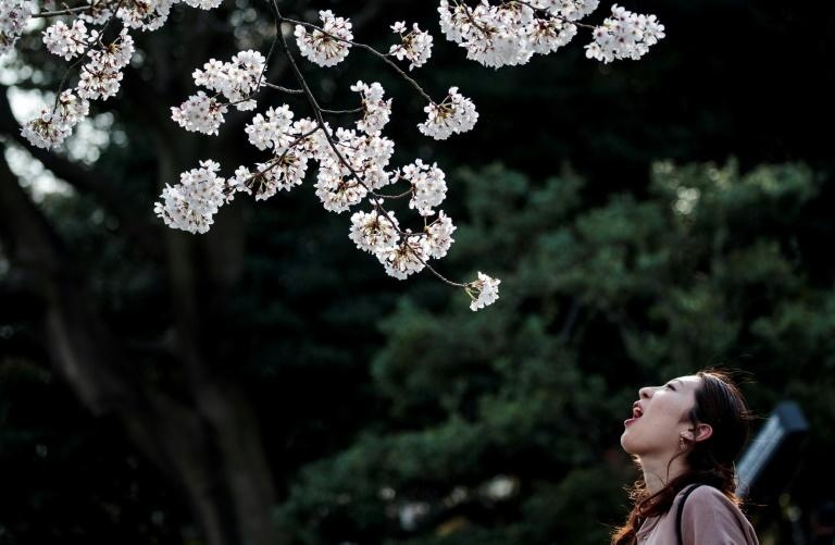 Signs and broadcast messages asked people in Tokyo to avoid large picnics, traditional during the cherry blossom season (AFP Photo/Behrouz MEHRI)