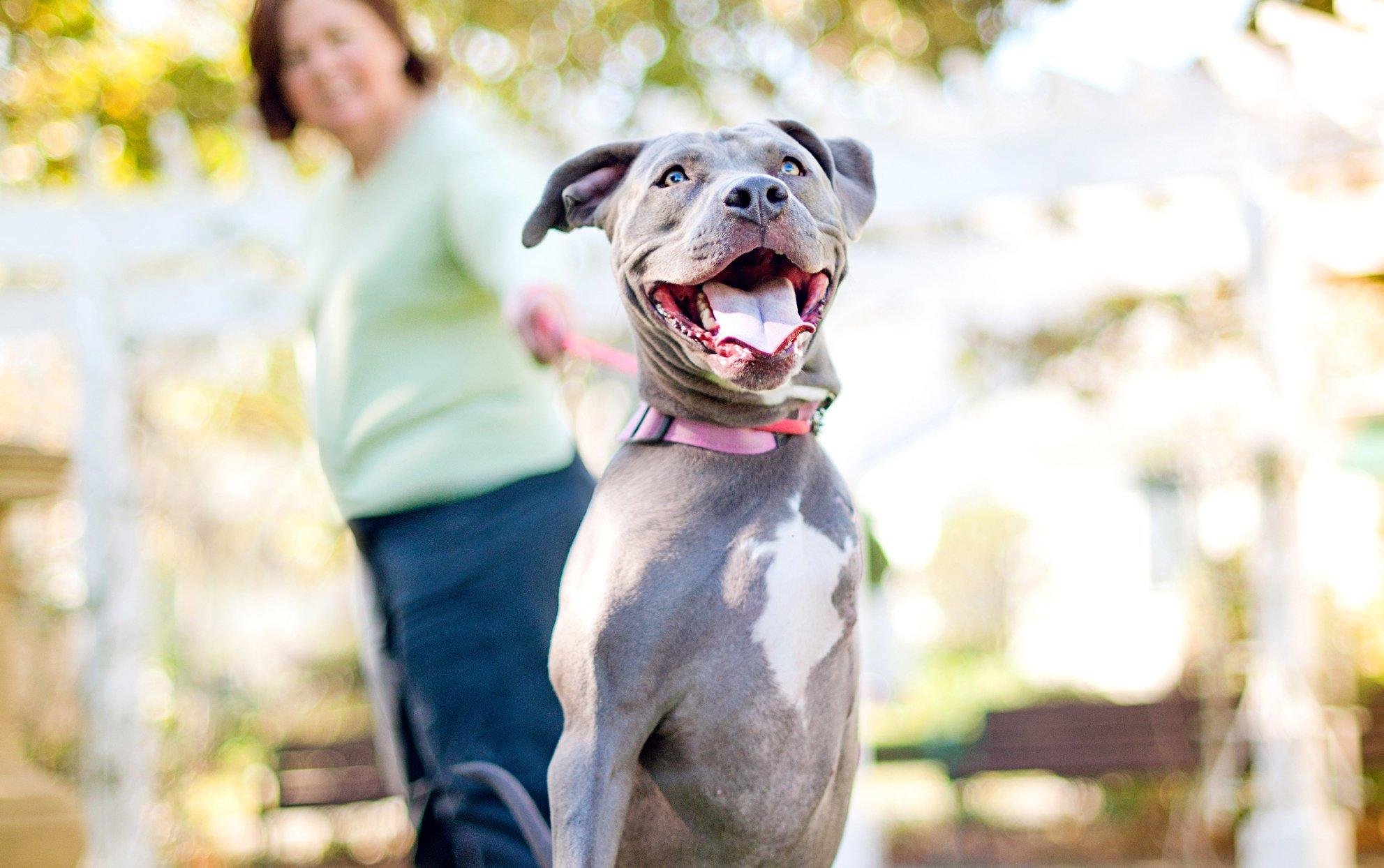 3 Pet Etiquette Tips You Should Know, Even If You Don't Own a Dog