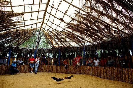 Cockfighting enthusiasts watch a fight at a cockfighting arena in Moron, central region of Ciego de Avila province, Cuba, February 16, 2017. REUTERS/Alexandre Meneghini