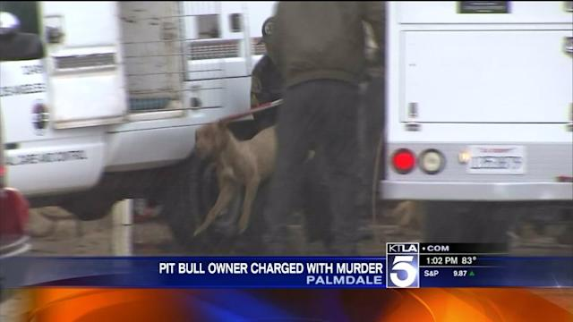 Jogger Killed by Pit Bull, Owner Faces Murder Charges