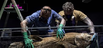 Study: Mysterious coelacanth fish can live for a century