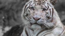 Réchauffement climatique: 1 espèce sur 3 d'animaux et de plantes pourrait avoir disparu d'ici 2070