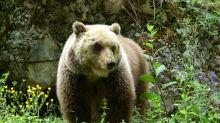 """Parla il carabiniere aggredito dall'orso: """"Ho temuto di morire"""""""