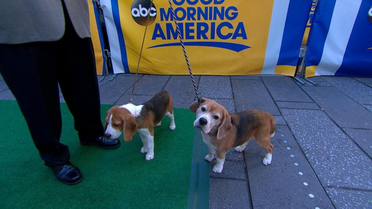 Gallery: American Kennel Club announces most popular dogs
