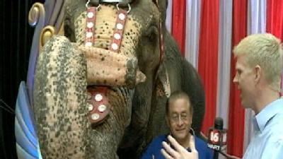 Circus Elephants Prepare To Perform In Jackson
