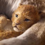 【電影抓重點】關於《獅子王》比動畫更真實更暖心的5大哭點+笑點!光是這3個經典片段就讓人起雞皮疙瘩