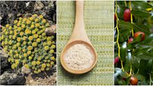 The 5 best plants to eat for eliminating stress
