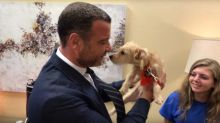 Liev Schreiber Immediately Adopts a Pair of Hurricane Harvey Rescue Dogs He Met on 'Live with Kelly and Ryan'
