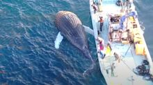 Whale's devastating death caught in 'shocking' footage sparking calls for action