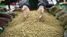 Compras chinas de soja a EEUU aumentan en febrero ante menor presión por comercio