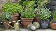 Plants prescribed for anxiety and depression in new 'feelgood' scheme