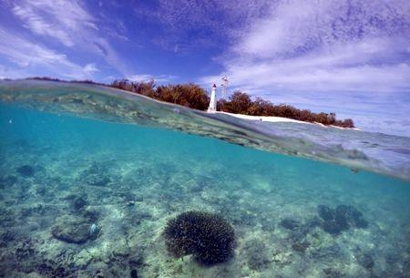 A piece of coral can be seen in the reef flats in front of the lighthouse on Lady Elliot Island and 80 kilometers north-east from the town of Bundaberg in Queensland, Australia