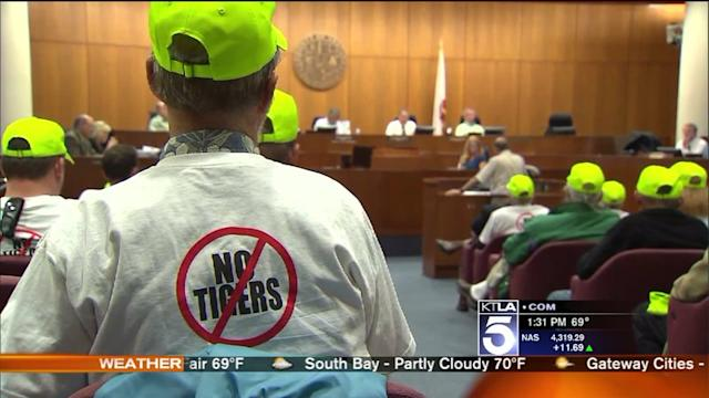 Tiger Housing Facility Voted Down by Ventura County Panel