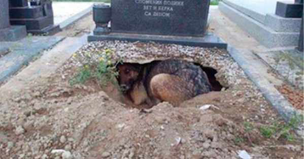 Dog Refuses To Leave Grave, Rescuer Spots Truth