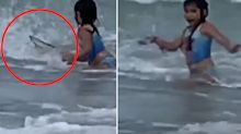Girl's terrifying encounter with shark near swimmers at beach
