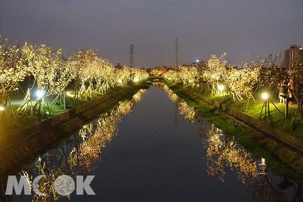 羅莊櫻花步道 (圖片提供/宜蘭ㄚ欣的美食日誌)