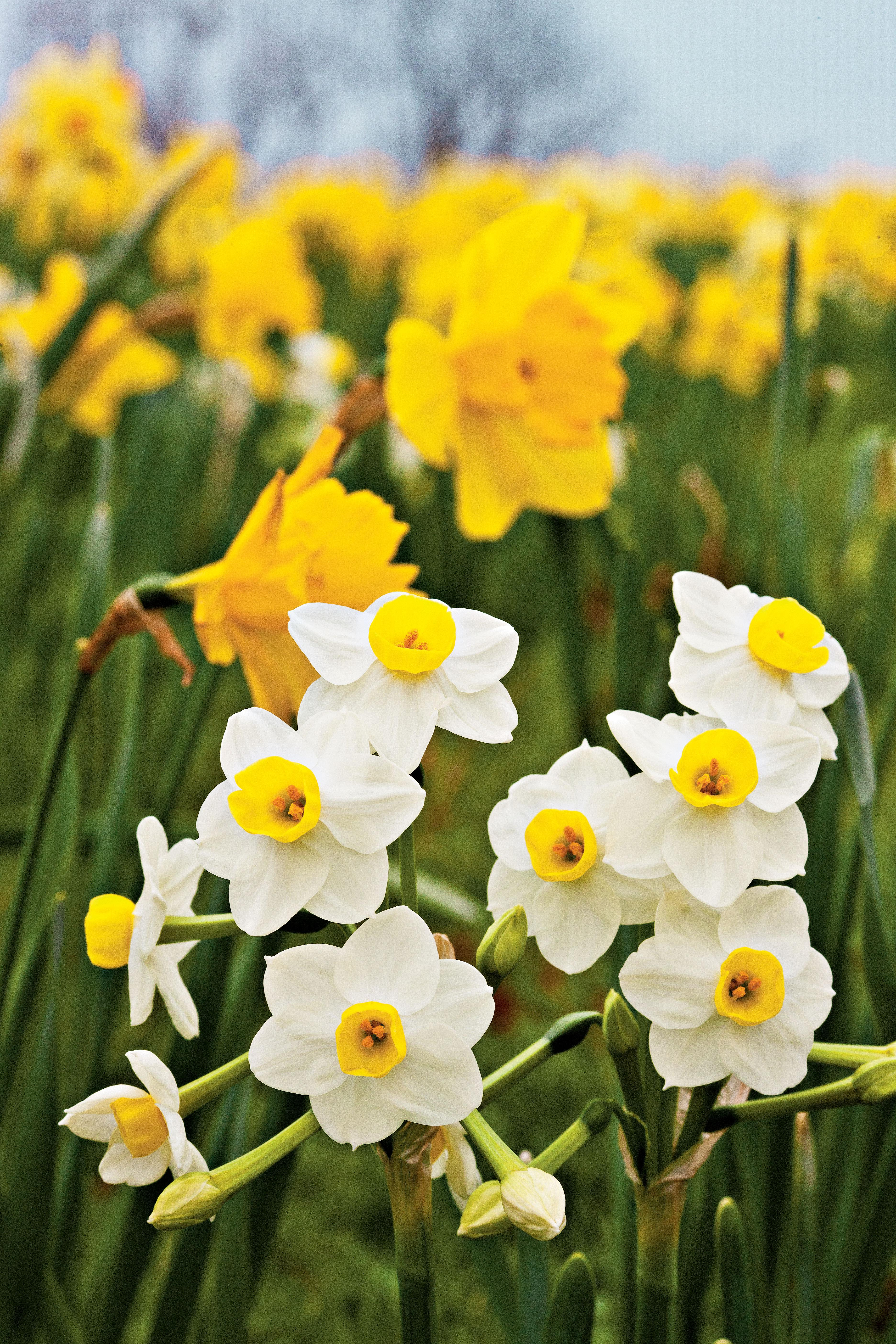 Plantageddon What To Do To Protect Your Spring Flowers