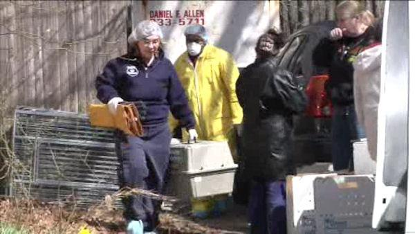 Hundreds of animals found in Long Island home