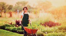 Vida nova ao seu jardim: ferramentas essenciais para manutenção