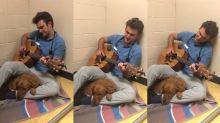 Veterinário faz serenata para cadela antes de operá-la e viraliza