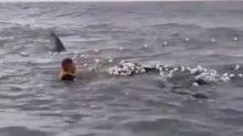 Empresário pula em alto mar para salvar filhote de baleia em SC