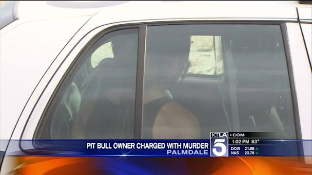 Man Arrested for Murder in Deadly Pit Bull Attack