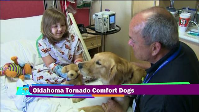 Comfort Dogs Helping OK Tornado Victims Heal