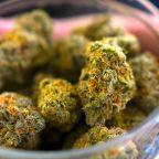 Gundlach: The cannabis boom looks like a 'mania'