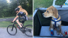 Cyclist gives injured stray dog piggyback to vet