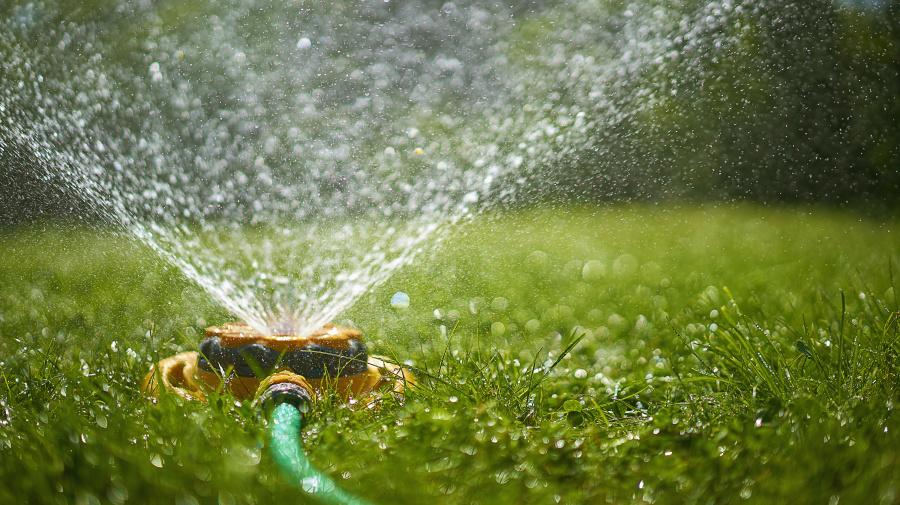 Tipps: So bewässerst du deinen Rasen richtig